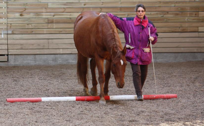 Hochsensibilität bei Menschen und Pferden