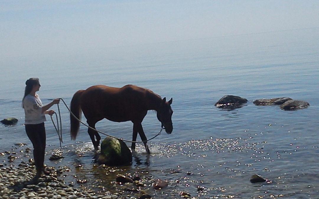 Vom Tun und Lassen zwischen Menschen und Pferden