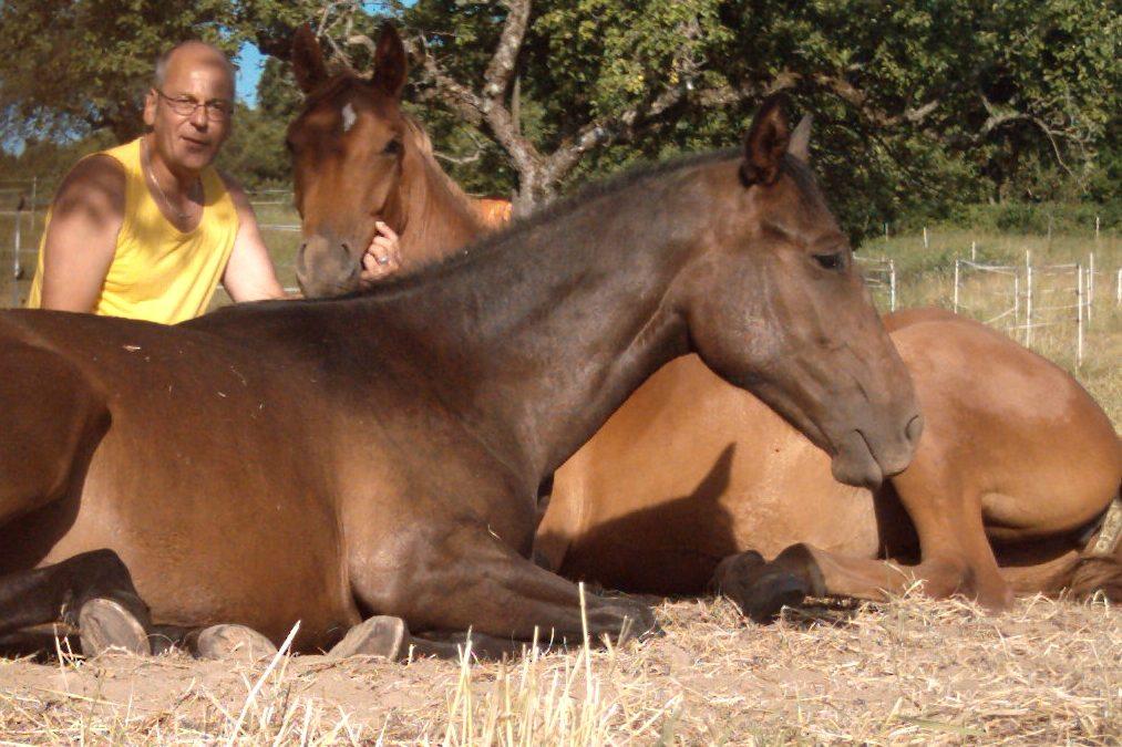 Fühlst du die Aura deines Pferdes?