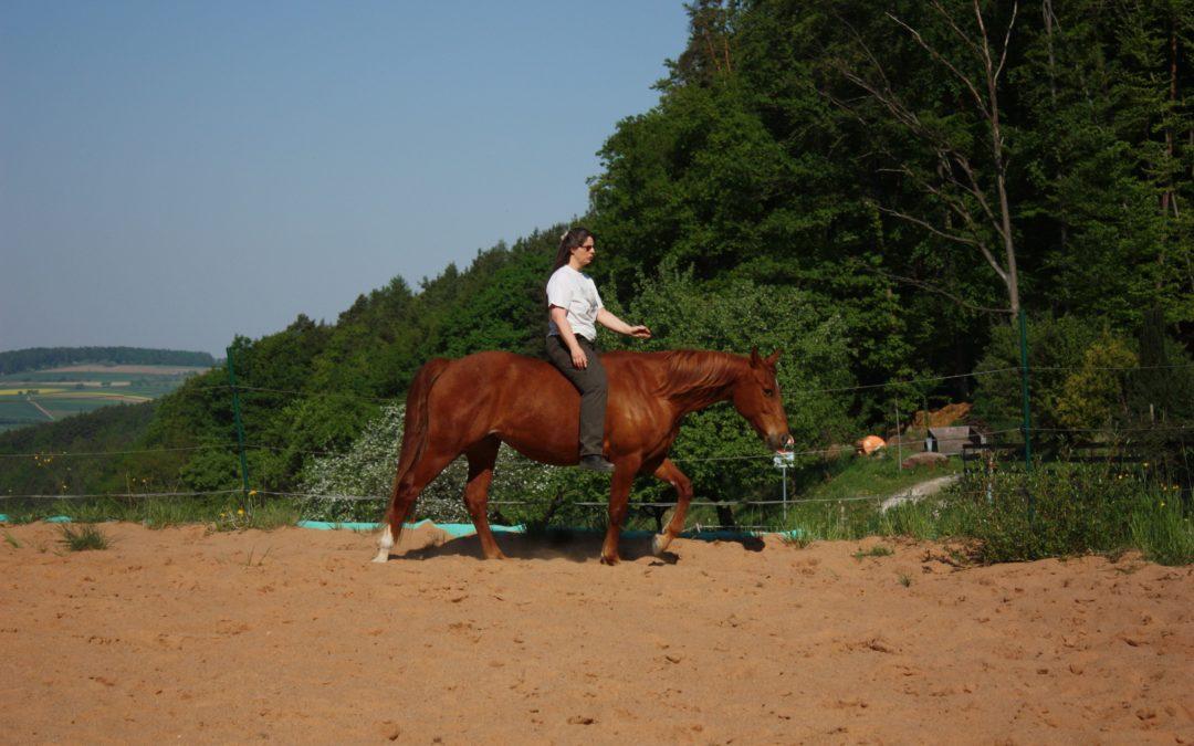 Das Gesetz von Saat und Ernte für Pferde-Menschen