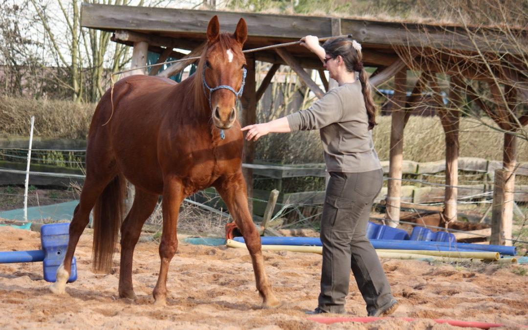 Spielst du mit deinem Pferd? Oder arbeitest du mit ihm?