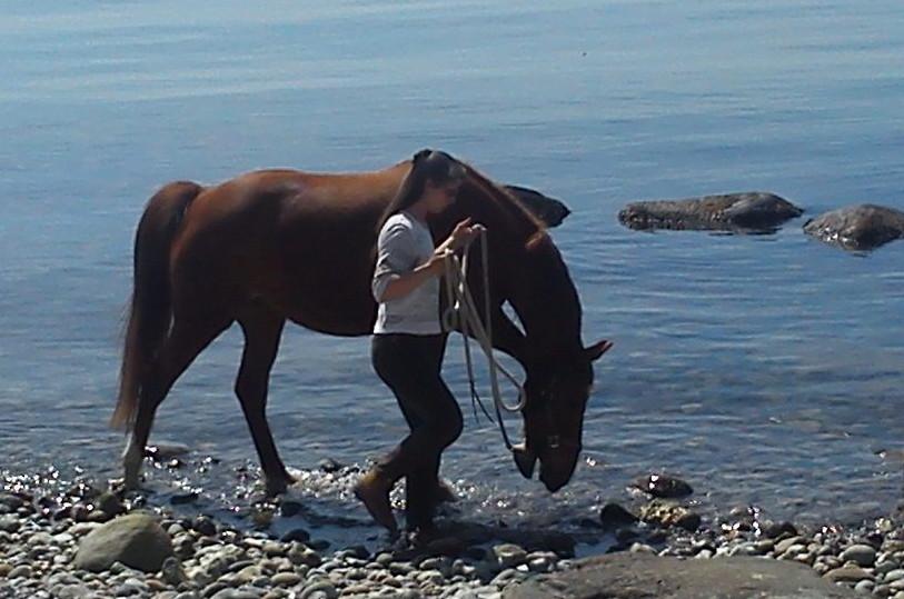 Klare Dialoge für eine angstfreie Beziehung zwischen Mensch und Pferd