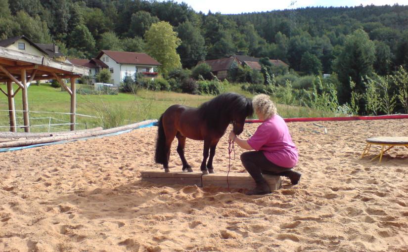 Der Schwebebalken für Pferde – Feine Dialoge fürSpielkinder und Künstler
