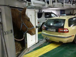 Pferdeanhänger auf der Fähre