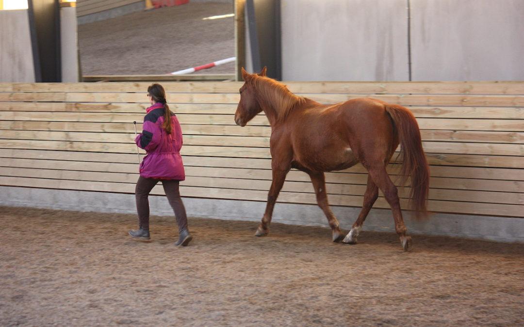 Wie werden (hoch)sensible Menschen und Pferde ein Dream-Team?