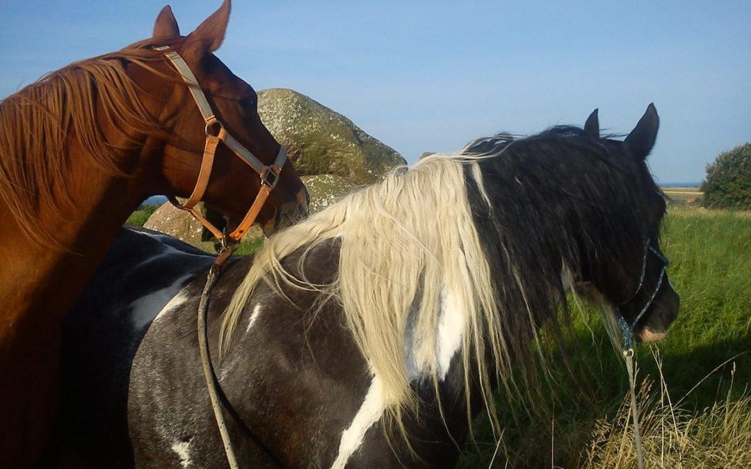 Pferde auf dem Lindsbjerg