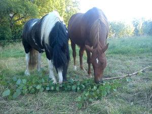 Weidenzweige für Pferde