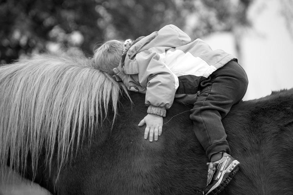 Bach-Blüten für Pferde – So bitte nicht