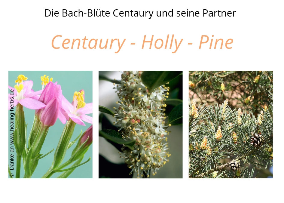 Bachblüten Centaury Holly Pine für Pferde