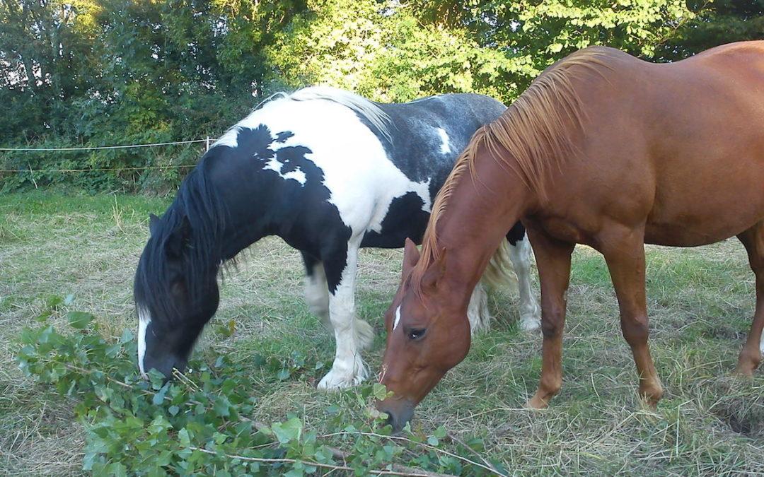 Wie Pferde sich selbst behandeln