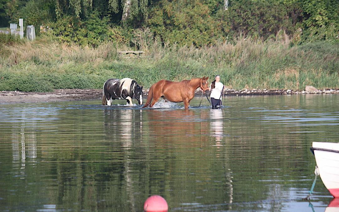Badespass mit Pferden