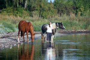 Badespass mit 2 Pferden