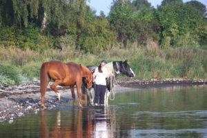 Baden mit 2 Pferden in der Ostsee